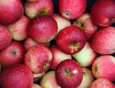 Picture of Organic Eating Apples (Europe)